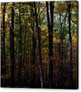 Colorful Fall Season Canvas Print