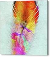 Colorful Feather Art Canvas Print