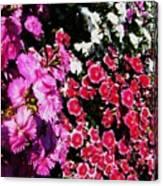 Colorful Flowers. Canvas Print