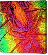 Colorful Frog On Leaf Canvas Print