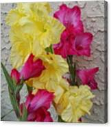 Colorful Glads Canvas Print