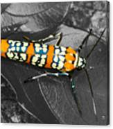 Colorful Insect - Ornate Bella Moth Canvas Print