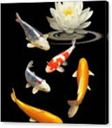 Colorful Koi With Water Lily Canvas Print
