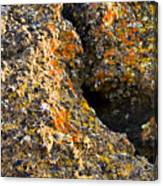 Colorful Lichens Canvas Print