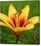 Colorful Lily Dew Drops Canvas Print