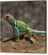 Colorful Lizard Canvas Print