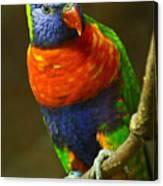 Colorful Lorikeet Canvas Print