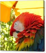 Colorful Macaw-1 Canvas Print