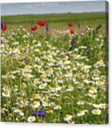 Colorful Meadow With Wild Flowers Canvas Print
