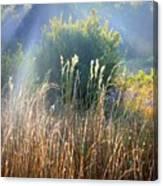 Colorful Morning Marsh Canvas Print