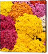 Colorful Mum Flowers Fine Art Abstract Photo Canvas Print