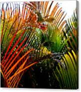 Colorful Palm Leaves Canvas Print