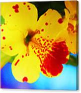Colorful Pansies Canvas Print