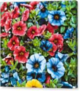 Colorful Petunias 2 Canvas Print