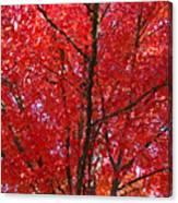 Colorful Red Orange Fall Tree Leaves Art Prints Autumn Canvas Print