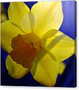 Colorful Spring Floral Canvas Print