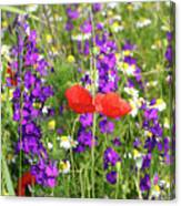 Colorful Spring Wild Flowers Canvas Print