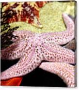 Colorful Starfish Canvas Print