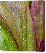 Colorful Ti Leaves Canvas Print