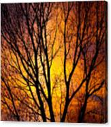 Colorful Tree Silhouettes Canvas Print