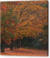 Colorful Trees Canvas Print