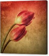 Colorful Tulips Textured Canvas Print
