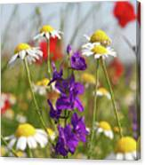 Colorful Wild Flowers Nature Scene Canvas Print