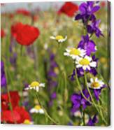 Colorful Wild Flowers Nature Spring Scene Canvas Print