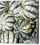 Colorful Winter Acorn Squash On Display Canvas Print