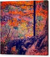 Colors In Nature  Canvas Print