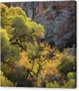 Colors Of Autumn In The Sonoran  Canvas Print