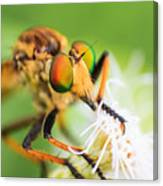 Colors Of Eye Canvas Print
