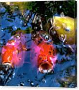 Colors Of Koi Canvas Print
