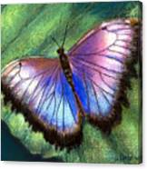 Colors Of Nature - Hunawihr Morpho Canvas Print