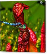 Colors Of Nature - Profile Of A Dragonfly 003 Canvas Print