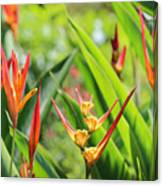 Colors Of The Tropics Canvas Print