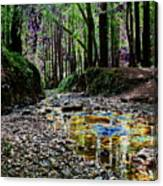 Colors On The Creek Canvas Print