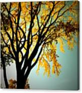 Colour Of The Fall Canvas Print