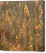 Colourful Autumn Leaves. Canvas Print