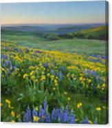 Columbia Hills Wildflower Dawn Canvas Print