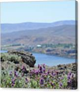 Columbia River Scenic Blooms #1 Canvas Print
