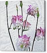 Columbine 3 Canvas Print
