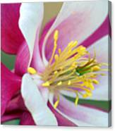 Columbine Flower 2 Canvas Print