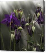 Columbine Mindscape Canvas Print