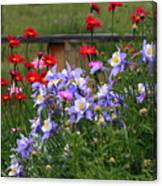 Columbines And Daisies Canvas Print