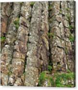 Columns Of Giants Canvas Print