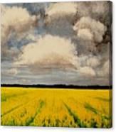 Colza Field Canvas Print