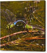 Come Along With Me Dragonflies Canvas Print