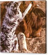 Comforting The Heifer With A Broken Leg Canvas Print