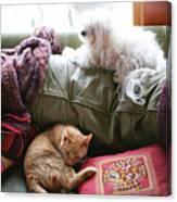 Comfy Bella And Cat Canvas Print